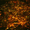 Liquid Gold - Fall leaves under water